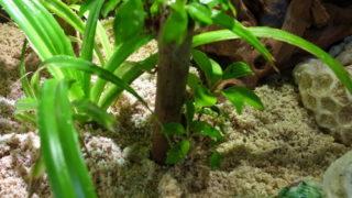 オカヤドカリと観葉植物